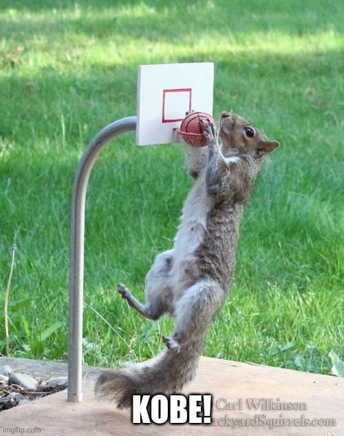 Squirrel basketball | KOBE! | image tagged in squirrel basketball | made w/ Imgflip meme maker