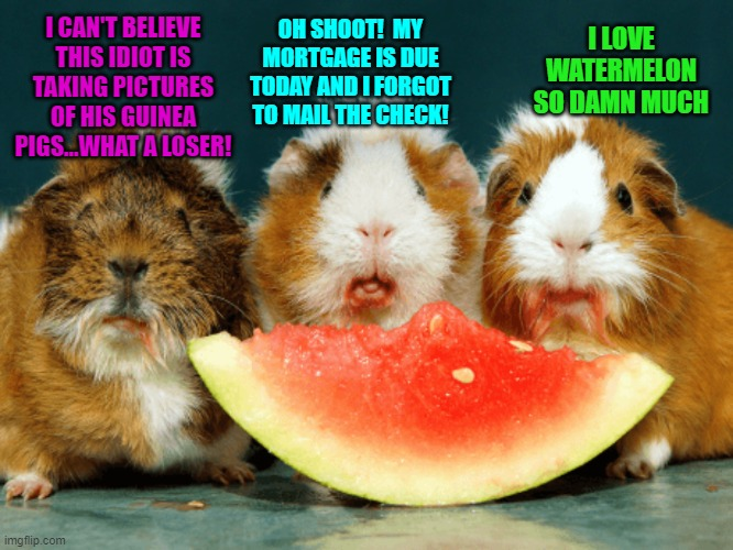 Random Thoughts of Guinea Pigs Eating Watermelon |  I LOVE WATERMELON SO DAMN MUCH; OH SHOOT!  MY MORTGAGE IS DUE TODAY AND I FORGOT TO MAIL THE CHECK! I CAN'T BELIEVE THIS IDIOT IS TAKING PICTURES OF HIS GUINEA PIGS...WHAT A LOSER! | image tagged in guinea pig,watermelon | made w/ Imgflip meme maker