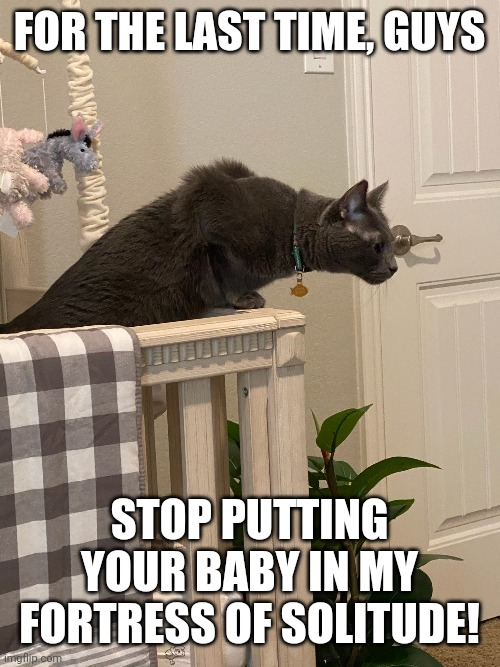 This is my Fortress of Solitude |  FOR THE LAST TIME, GUYS; STOP PUTTING YOUR BABY IN MY FORTRESS OF SOLITUDE! | image tagged in black cat,baby | made w/ Imgflip meme maker