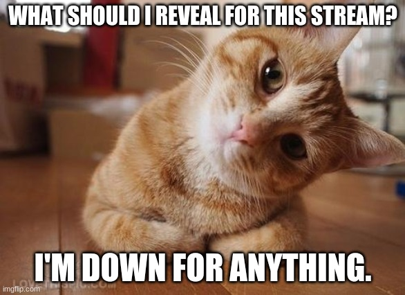 (=θωθ=) |  WHAT SHOULD I REVEAL FOR THIS STREAM? I'M DOWN FOR ANYTHING. | image tagged in curious question cat | made w/ Imgflip meme maker