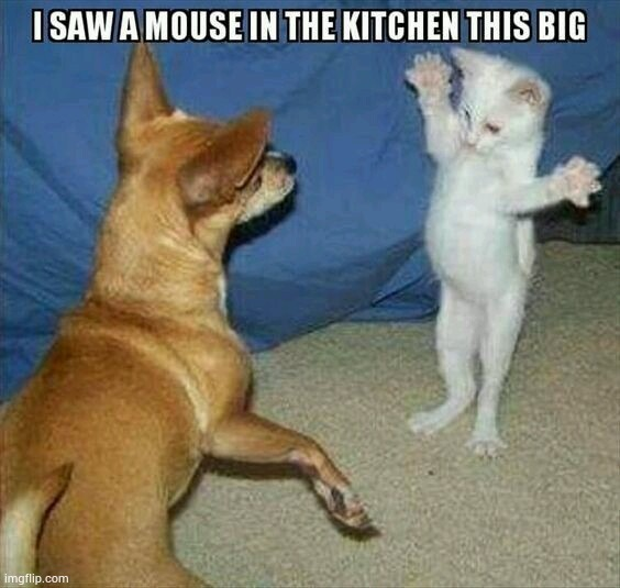 Cat saw a huge mouse | image tagged in cats,cat,cute cat,funny cats,funny cat memes,lolcats | made w/ Imgflip meme maker