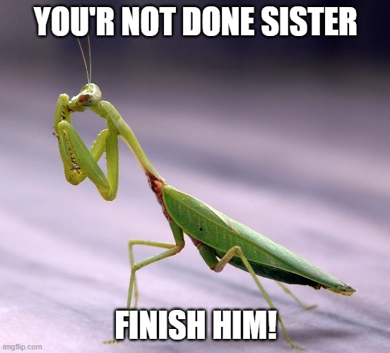 praying mantis |  YOU'R NOT DONE SISTER; FINISH HIM! | image tagged in bug humor,praying mantis | made w/ Imgflip meme maker