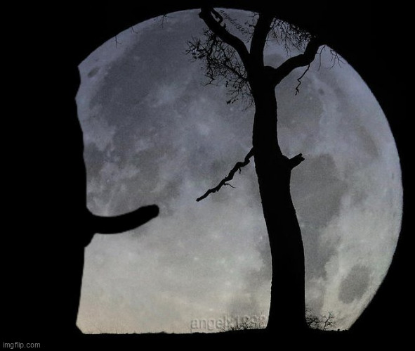 full moon | image tagged in full moon,trunks,tree,silhouette,branches,moon | made w/ Imgflip meme maker