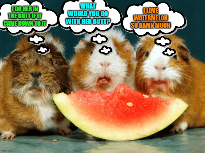 More Random Thoughts of Guinea Pigs |  WHAT WOULD YOU DO WITH HER BUTT? I LOVE WATERMELON SO DAMN MUCH; I DO HER IN THE BUTT IF IT CAME DOWN TO IT | image tagged in guinea pig,random,butt | made w/ Imgflip meme maker