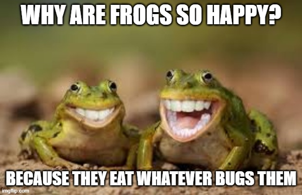 Be happy just like these frogs. |  WHY ARE FROGS SO HAPPY? BECAUSE THEY EAT WHATEVER BUGS THEM | image tagged in frogs,funny,memes,fun,joy | made w/ Imgflip meme maker