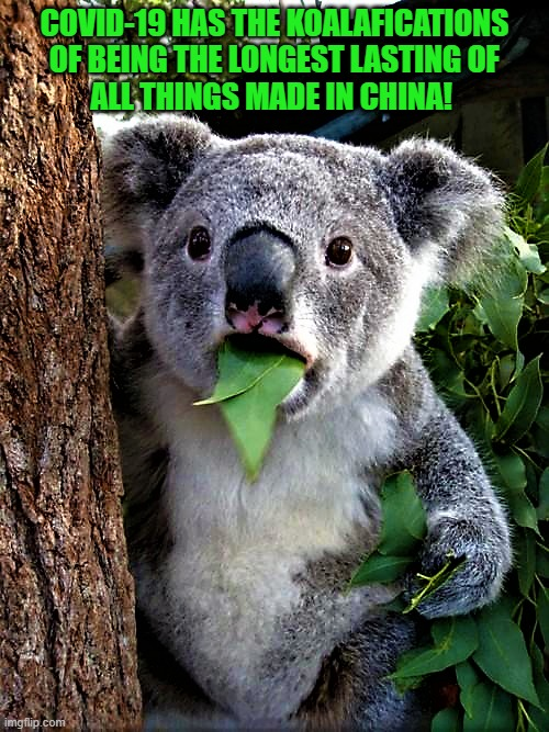informative Koala |  COVID-19 HAS THE KOALAFICATIONS OF BEING THE LONGEST LASTING OF ALL THINGS MADE IN CHINA! | image tagged in funny animal meme,surprised koala,koala,covid-19,made in china,china virus | made w/ Imgflip meme maker