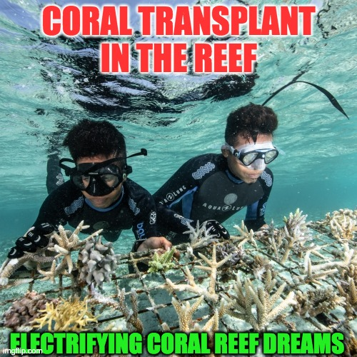 CORAL PLANTATION |  CORAL TRANSPLANT IN THE REEF; ELECTRIFYING CORAL REEF DREAMS | image tagged in coral plantation | made w/ Imgflip meme maker