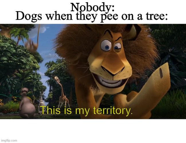 This meme is my territory |  Nobody:; Dogs when they pee on a tree:; This is my territory. | image tagged in dog memes | made w/ Imgflip meme maker