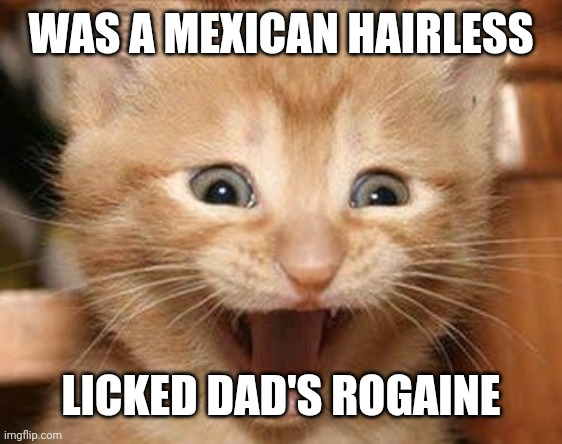 Excited Cat |  WAS A MEXICAN HAIRLESS; LICKED DAD'S ROGAINE | image tagged in memes,excited cat | made w/ Imgflip meme maker