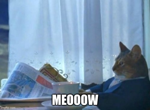 I Should Buy A Boat Cat Meme |  MEOOOW | image tagged in memes,i should buy a boat cat | made w/ Imgflip meme maker