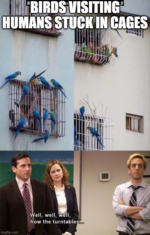 weird switch... |  BIRDS VISITING HUMANS STUCK IN CAGES | image tagged in well well well how the turn tables,animals,stupid,funny,memes,humans | made w/ Imgflip meme maker