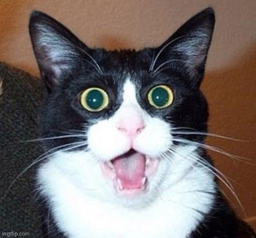 Surprised cat lol | image tagged in surprised cat lol | made w/ Imgflip meme maker