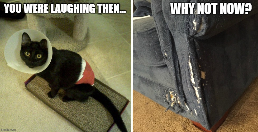 You Were Laughing Then... Why Not Now? |  WHY NOT NOW? YOU WERE LAUGHING THEN... | image tagged in black cat,spayed,destroying furniture,claws | made w/ Imgflip meme maker
