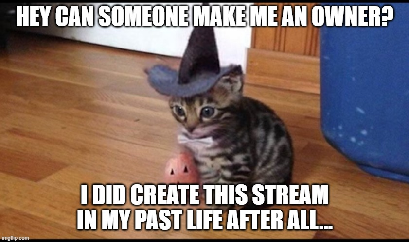 Halloween cat |  HEY CAN SOMEONE MAKE ME AN OWNER? I DID CREATE THIS STREAM IN MY PAST LIFE AFTER ALL... | image tagged in halloween cat | made w/ Imgflip meme maker