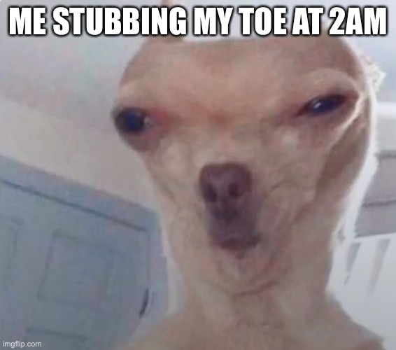 New template! |  ME STUBBING MY TOE AT 2AM | image tagged in disgusted dog | made w/ Imgflip meme maker