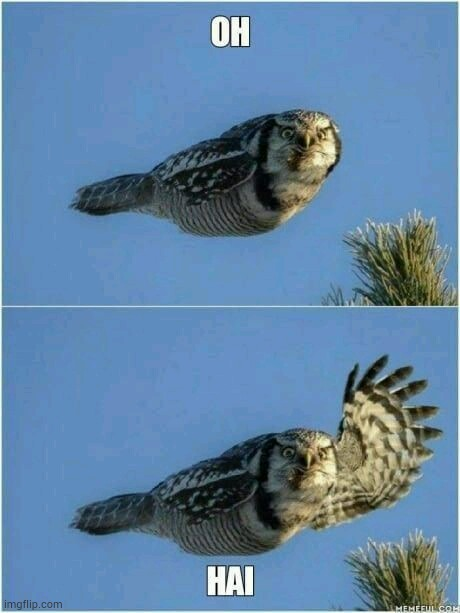 Owl waving | image tagged in animals,funny animals,animal meme | made w/ Imgflip meme maker