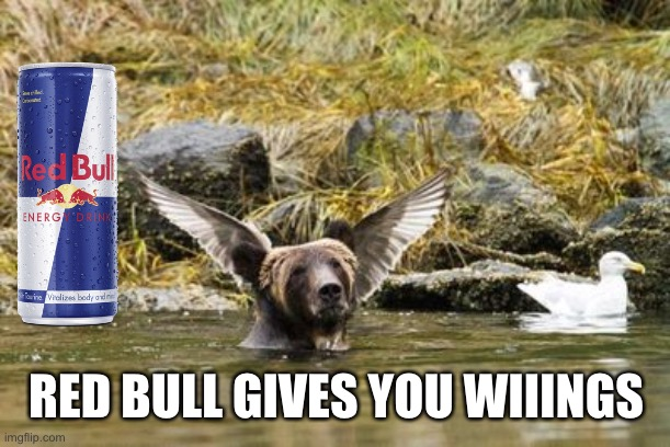 Sounds Like Bull |  RED BULL GIVES YOU WIIINGS | image tagged in bear,birds,red bull,energy drinks,wiiings | made w/ Imgflip meme maker