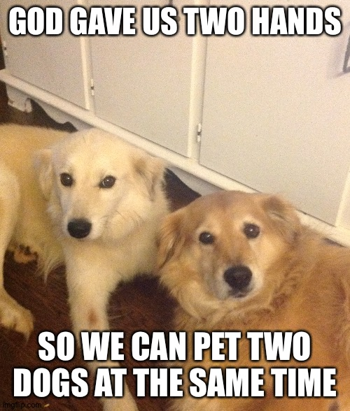Thanks for giving us two hands instead of just one |  GOD GAVE US TWO HANDS; SO WE CAN PET TWO DOGS AT THE SAME TIME | image tagged in cute dogs,dogs,god,hands,thank you | made w/ Imgflip meme maker
