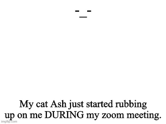 Ash is so cute though, so I let her stay. |  -_-; My cat Ash just started rubbing up on me DURING my zoom meeting. | image tagged in blank white template | made w/ Imgflip meme maker