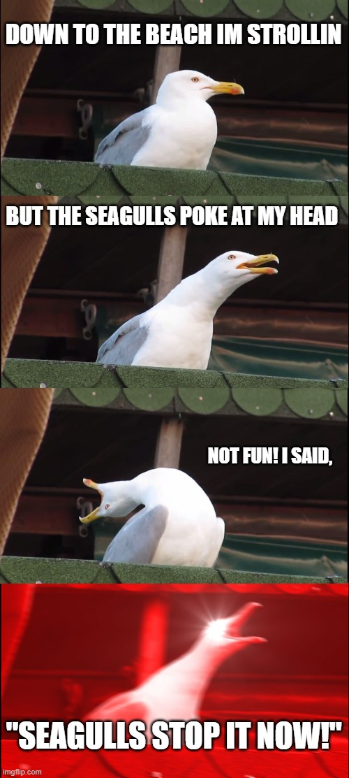 "Seagulls must be stopped |  DOWN TO THE BEACH IM STROLLIN; BUT THE SEAGULLS POKE AT MY HEAD; NOT FUN! I SAID, ""SEAGULLS STOP IT NOW!"" 