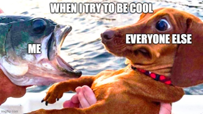 When I try to be cool | image tagged in funny dogs,dogs,fish,cool | made w/ Imgflip meme maker