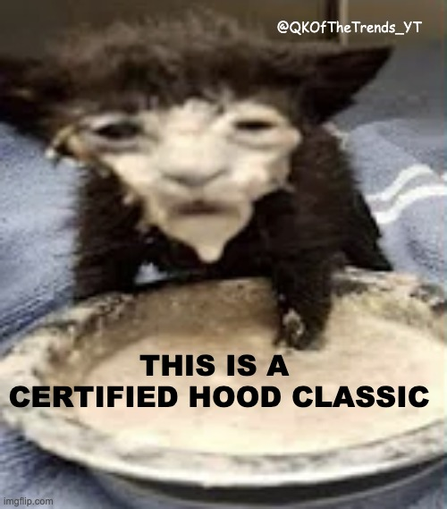 THIS IS A CERTIFIED HOOD CLASSIC |  @QKOfTheTrends_YT; THIS IS A  CERTIFIED HOOD CLASSIC | image tagged in idiot,kitten,cream,face | made w/ Imgflip meme maker