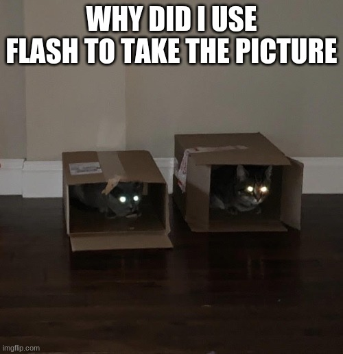 no Photoshop was used in the making of this picture |  WHY DID I USE FLASH TO TAKE THE PICTURE | image tagged in mistake,lolcats,box,demon | made w/ Imgflip meme maker