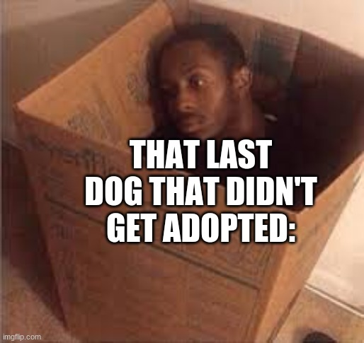 THAT LAST DOG THAT DIDN'T GET ADOPTED: | image tagged in black dude in the box,memes,dank memes,dogs | made w/ Imgflip meme maker