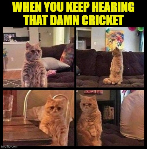 SO annoying!  But yeah, just like that  LOL |  WHEN YOU KEEP HEARING THAT DAMN CRICKET | image tagged in funny,cats,crickets,annoying,annoyed,what's going on | made w/ Imgflip meme maker