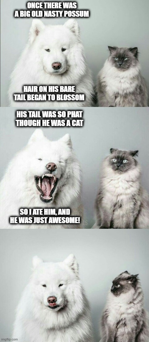 bad joke dog cat |  ONCE THERE WAS A BIG OLD NASTY POSSUM; HAIR ON HIS BARE TAIL BEGAN TO BLOSSOM; HIS TAIL WAS SO PHAT THOUGH HE WAS A CAT; SO I ATE HIM, AND HE WAS JUST AWESOME! | image tagged in bad joke dog cat,memes,possum,blossom,awesome | made w/ Imgflip meme maker