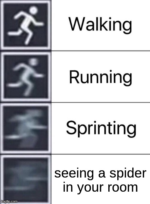 spider |  seeing a spider in your room | image tagged in walking running sprinting,memes | made w/ Imgflip meme maker