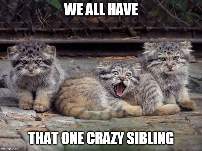 THE OTHER 2 DONT LOOK SO HAPPY WITH HIM |  WE ALL HAVE; THAT ONE CRAZY SIBLING | image tagged in cats,funny cats,kittens | made w/ Imgflip meme maker