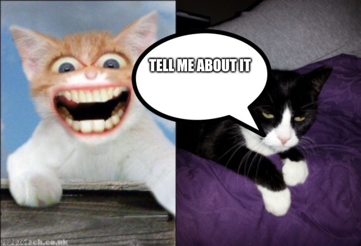 TELL ME ABOUT IT | image tagged in crazy cat,annoyed cat | made w/ Imgflip meme maker
