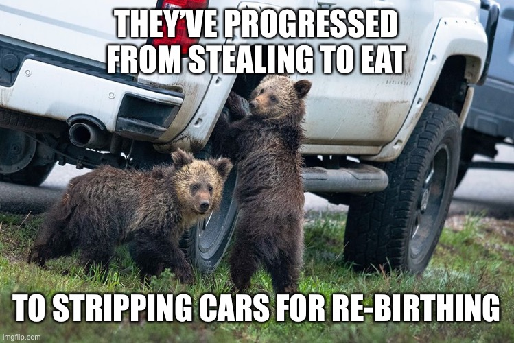 THEY'VE PROGRESSED FROM STEALING TO EAT; TO STRIPPING CARS FOR RE-BIRTHING | image tagged in bear,bad luck bear,bears,we bare bears,stealing,car | made w/ Imgflip meme maker