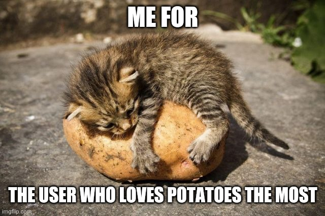 (Lol, but for real tho I love potatoes) |  ME FOR; THE USER WHO LOVES POTATOES THE MOST | image tagged in potato cat | made w/ Imgflip meme maker