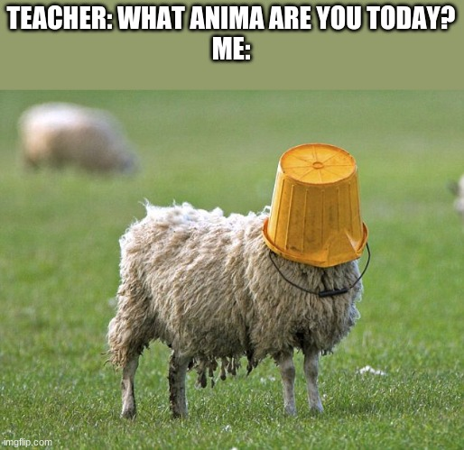 Me every day |  TEACHER: WHAT ANIMA ARE YOU TODAY? ME: | image tagged in stupid sheep,school meme | made w/ Imgflip meme maker
