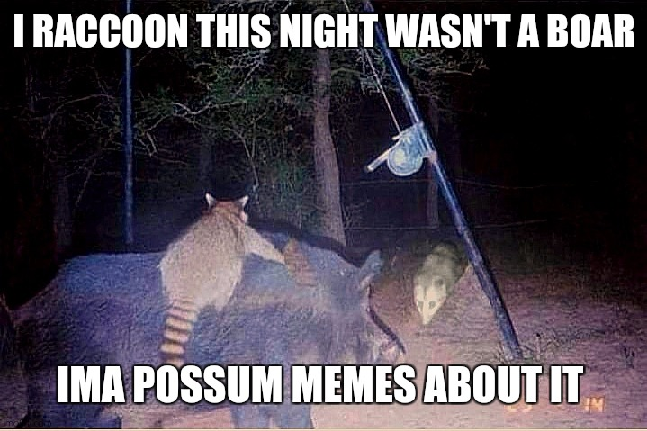 Wild puns |  I RACCOON THIS NIGHT WASN'T A BOAR; IMA POSSUM MEMES ABOUT IT | image tagged in a raccoon boar and a possum party,nature,wildlife | made w/ Imgflip meme maker