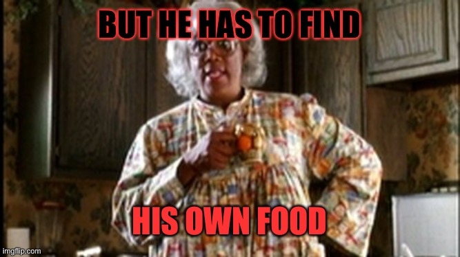 black mom | BUT HE HAS TO FIND HIS OWN FOOD | image tagged in black mom | made w/ Imgflip meme maker