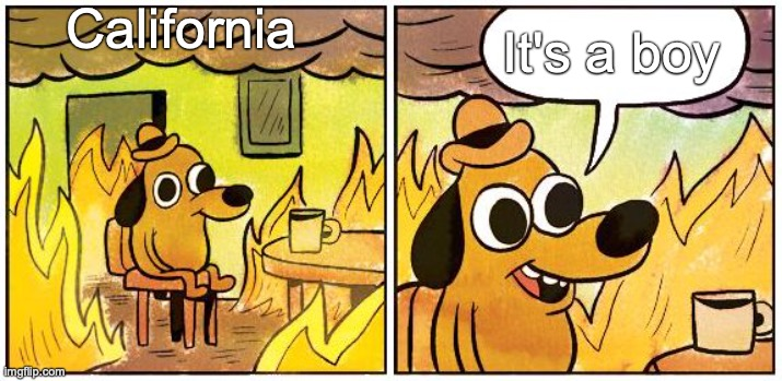 It's a boy!!!! |  California; It's a boy | image tagged in this is fine blank,this is fine,california,california fires,wildfires,wildfire | made w/ Imgflip meme maker