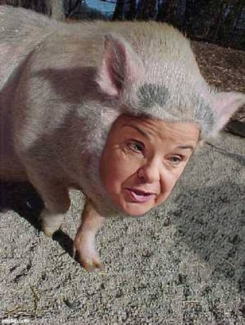 feinswine | image tagged in feinstein | made w/ Imgflip meme maker