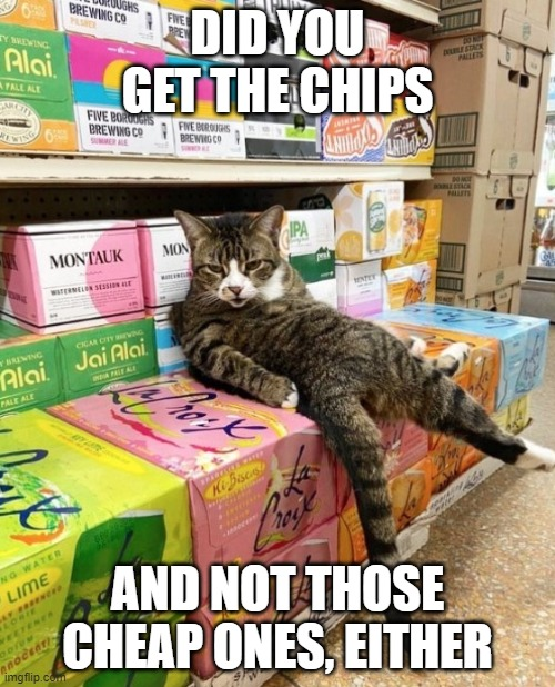 DID YOU GET THE CHIPS; AND NOT THOSE CHEAP ONES, EITHER | image tagged in cats,funny,snacks,shopping | made w/ Imgflip meme maker