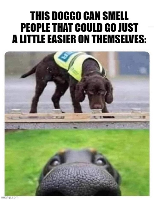 Memers are their own worst critics sometimes. Y'all have good day today! |  THIS DOGGO CAN SMELL PEOPLE THAT COULD GO JUST A LITTLE EASIER ON THEMSELVES: | image tagged in this dog can smell you | made w/ Imgflip meme maker