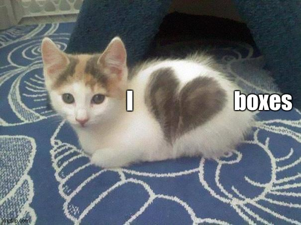 cute cat heart | I boxes | image tagged in cute cat heart | made w/ Imgflip meme maker