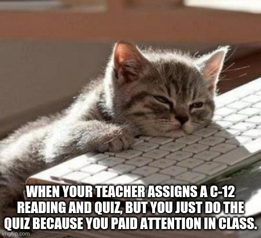 sorry *Ck-12* |  WHEN YOUR TEACHER ASSIGNS A C-12 READING AND QUIZ, BUT YOU JUST DO THE QUIZ BECAUSE YOU PAID ATTENTION IN CLASS. | image tagged in tired cat | made w/ Imgflip meme maker