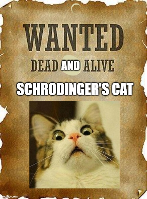get it lol |  AND; SCHRODINGER'S CAT | image tagged in wanted dead or alive,schrodinger,funny joke lol | made w/ Imgflip meme maker