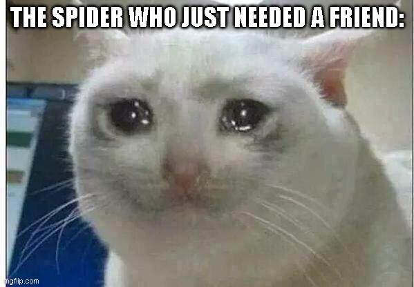 crying cat | THE SPIDER WHO JUST NEEDED A FRIEND: | image tagged in crying cat | made w/ Imgflip meme maker