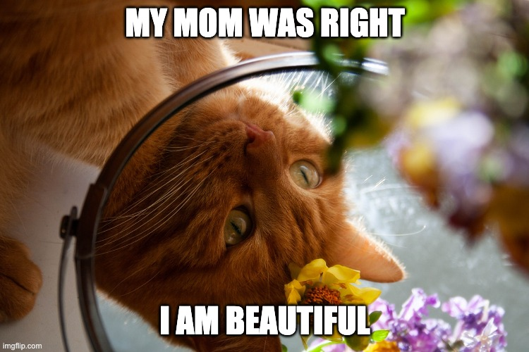 My Mom Was Right I Am Beaufitul - Funny Cat Meme |  MY MOM WAS RIGHT; I AM BEAUTIFUL | image tagged in funny cat memes,cat memes,cat meme,cute cat,cute cats | made w/ Imgflip meme maker