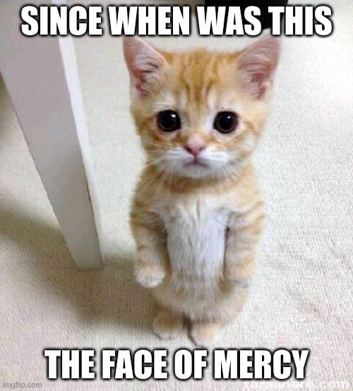 Cute Cat |  SINCE WHEN WAS THIS; THE FACE OF MERCY | image tagged in memes,cute cat | made w/ Imgflip meme maker