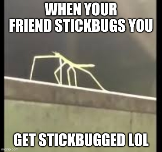 Stickbug |  WHEN YOUR FRIEND STICKBUGS YOU; GET STICKBUGGED LOL | image tagged in memes,stick | made w/ Imgflip meme maker