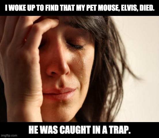 Elvis has left |  I WOKE UP TO FIND THAT MY PET MOUSE, ELVIS, DIED. HE WAS CAUGHT IN A TRAP. | image tagged in memes,first world problems | made w/ Imgflip meme maker